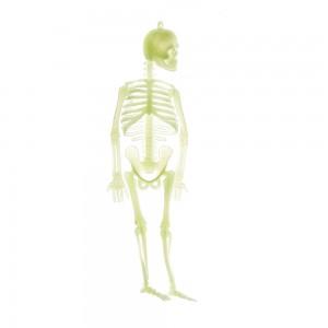 Скелет светящийся в темноте 20 см (skeletsvet)