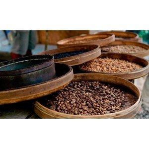 Види і сорти кави – посібник для початківців кавоманів