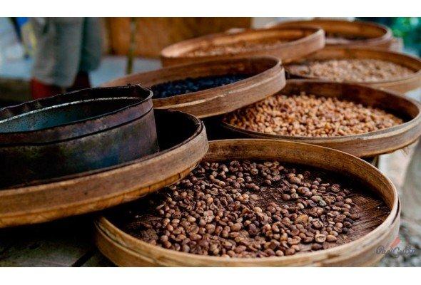 Виды и сорта кофе — пособие для начинающих кофеманов