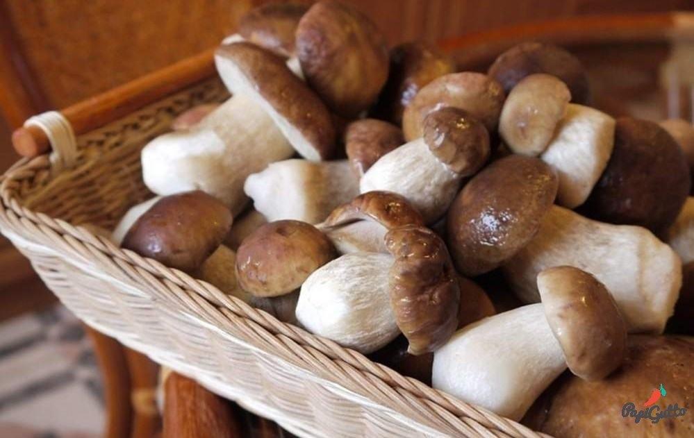 Белые грибы (боровики) - 03