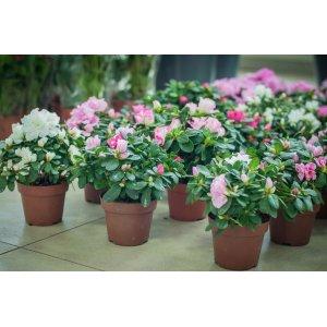 Выбор комнатных растений на подарок