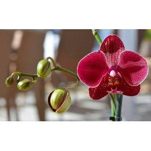 Орхидея в интерьере: лучшие решения для украшения комнаты