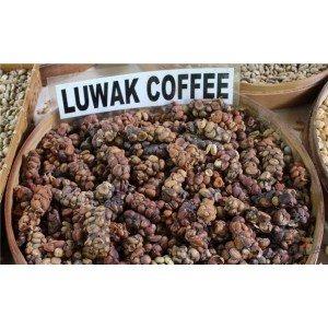 Кофе лювак – самый дорогостоящий и экзотический кофе для гурманов