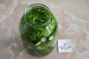 Малосольні огірки 10